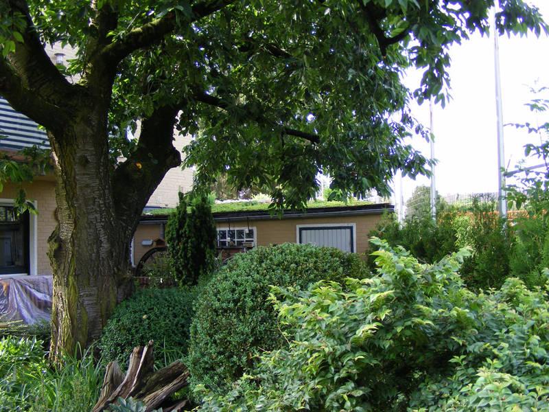 Garten und Landschaftsbau Hamm Melbert Dachbegrünung